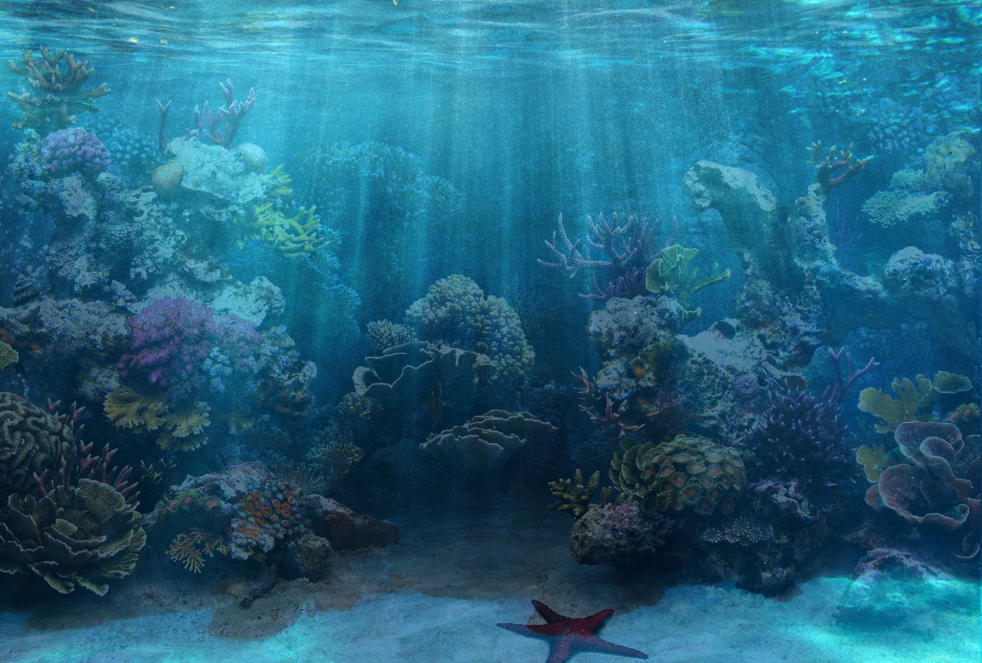 aquarium backgrounds coral - photo #33